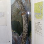 See Milford Haven's Mammoth tusk, dug locally