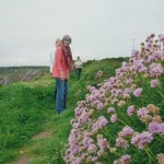 Sea Pinks on the coast path